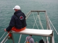 Great White Shark Tours Gansbaai South Africa caged diving 31