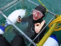 Great White Shark Tours Gansbaai South Africa caged diving 34