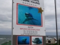 Great White Shark Tours Gansbaai South Africa caged diving  6