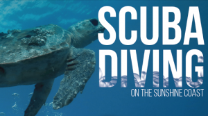 liquidlife, scuba diving, sunshine coast