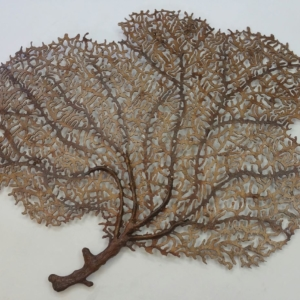 Decorative Sea Fan Sculpture