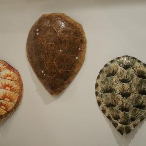 turtle02
