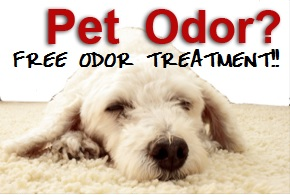 Pet Odor Removal GA
