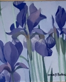 Three Irises
