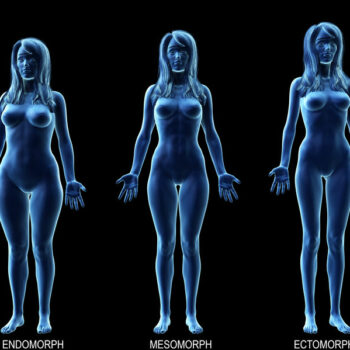 3D rendering of female metabolic types endomorph, mesomorph, ectomorph.