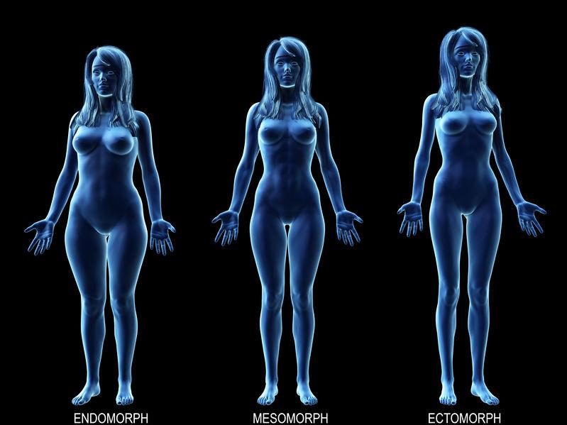 3D rendering of female metabolic types endomorph, mesomorph, ectomorph.