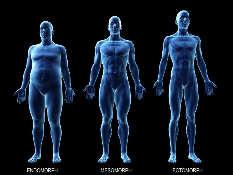 3D rendering of male metabolic types endomorph, mesomorph, ectomorph.