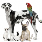 Pet Business Loans