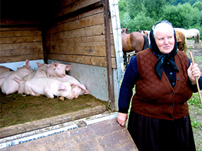 livestock business financing