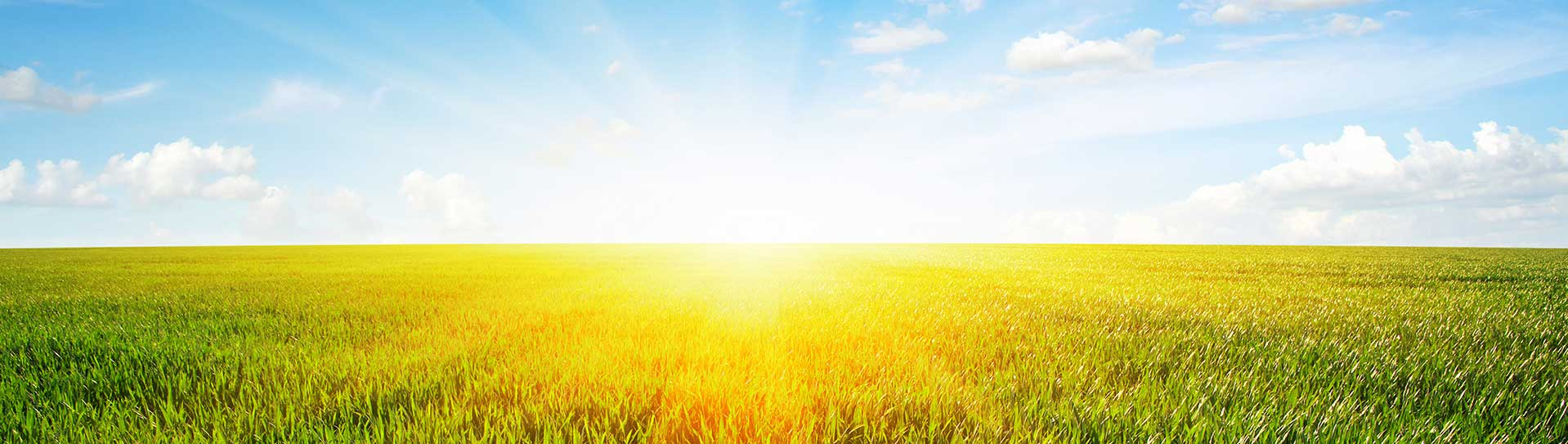 image of a sunrise over a field
