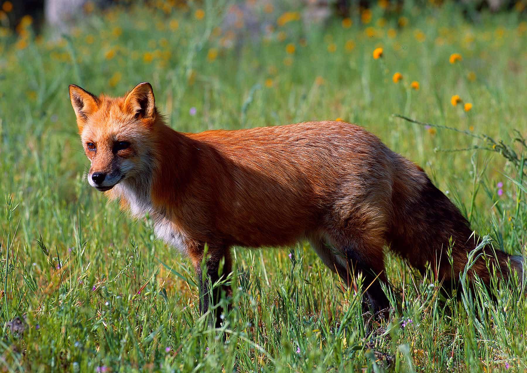 zuckerman_wildlife_photography_image02