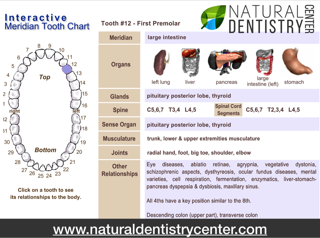 Yuriy May Interactive Meridian Tooth Chart