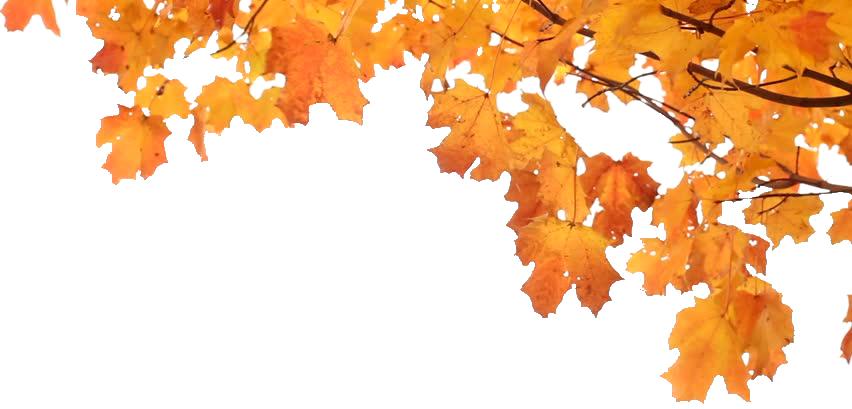 Πορτοκαλένια…