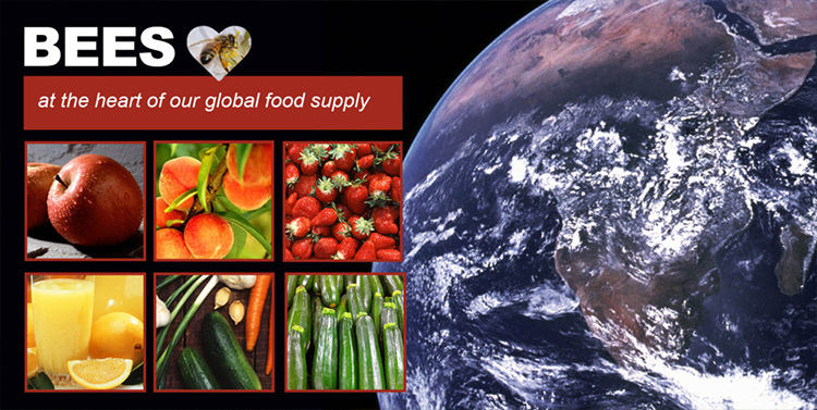 Bees-at the heart of our global food supply
