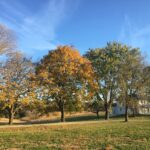 Fall treeline