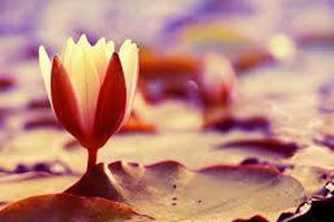Self Care Meditation with Stephanie Thomas