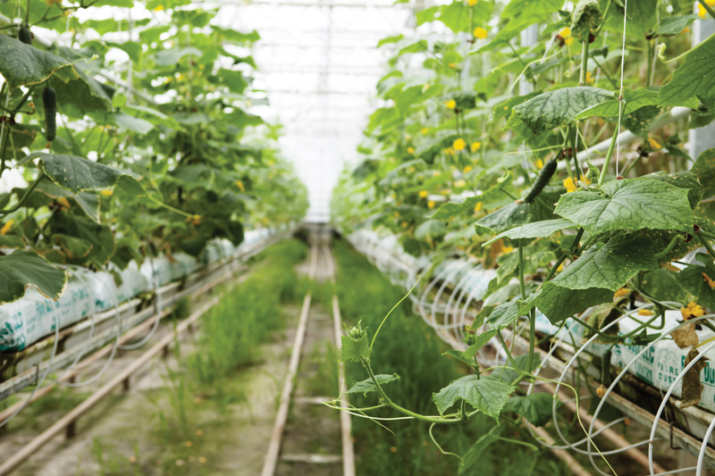 Are You Testing Your Plants for Heavy Metals