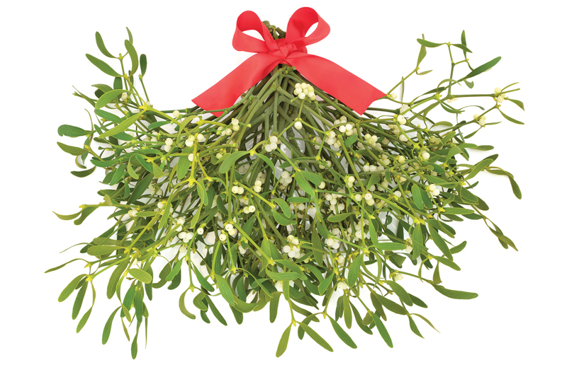 Mistletoe Therapy In Cancer Care Elm Maine