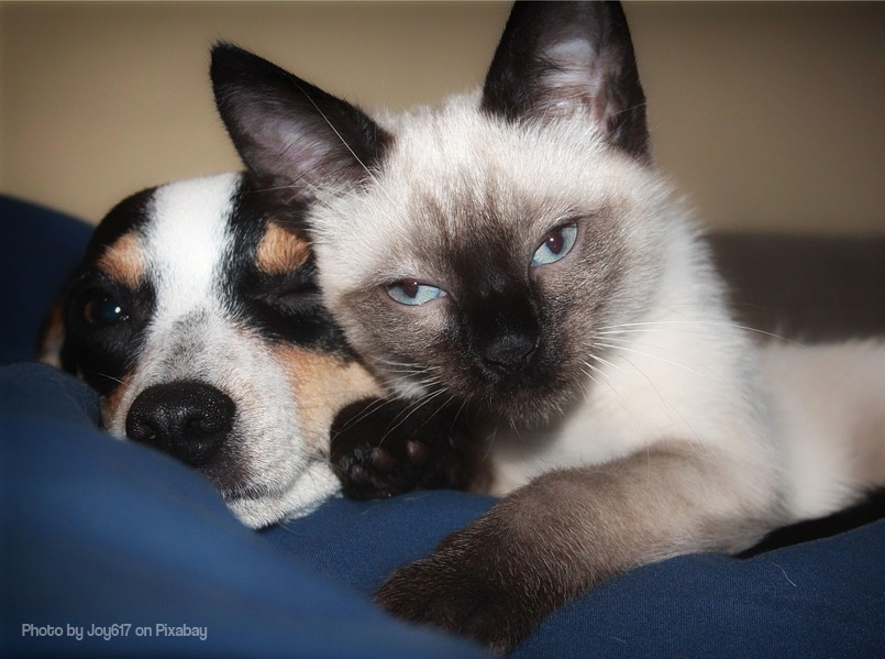 Image of dog and cat showing what love is