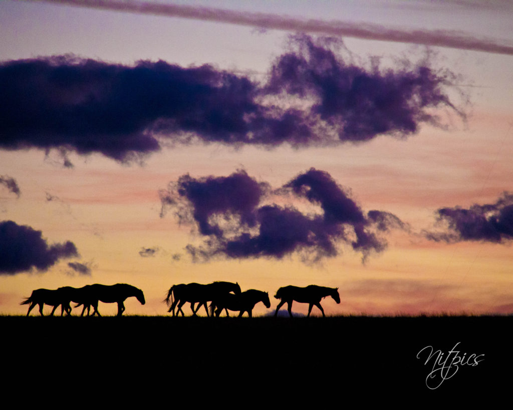 Montana horses in the American Old West | My Wandering Voyage travel blog