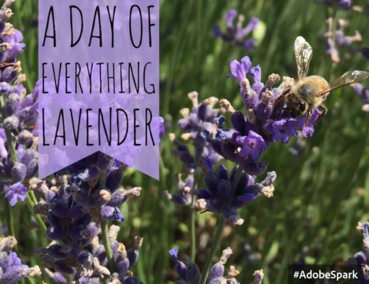 A day of everything lavender festival
