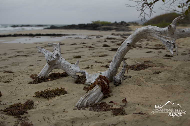 Isabela Island Galapagos   My Wandering Voyage travel blog