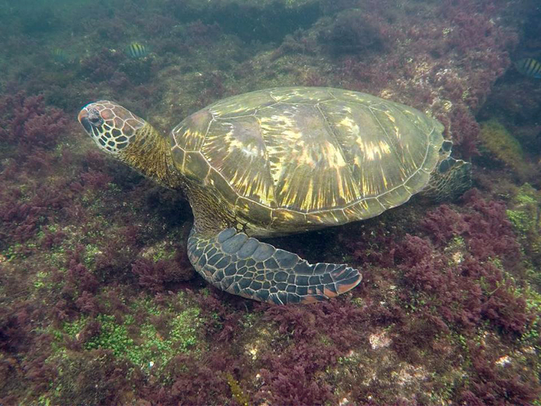 Snorkelling in the Galapagos | My Wandering Voyage travel blog