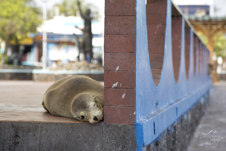 The Galapagos Islands - How to take better travel photographs | My Wandering Voyage travel blog