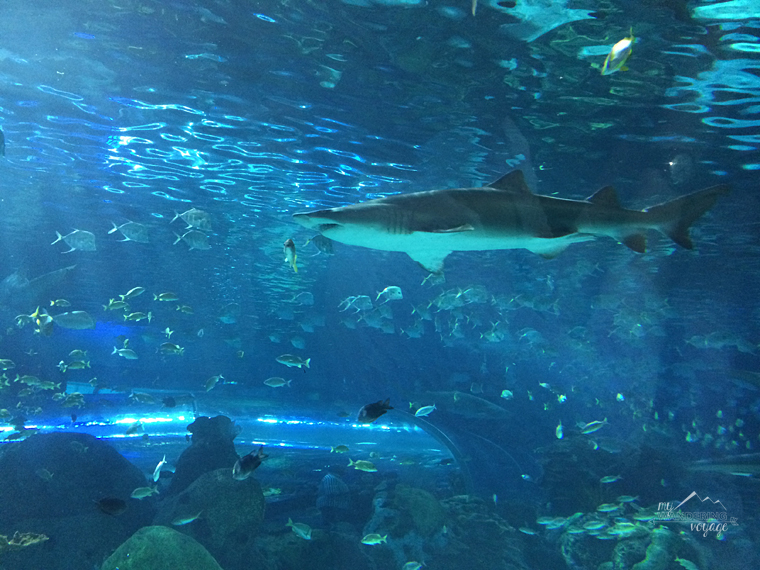 Ripley's Aquarium of Canada - Top ten things to do in Toronto for first timers | My Wandering Voyage travel blog