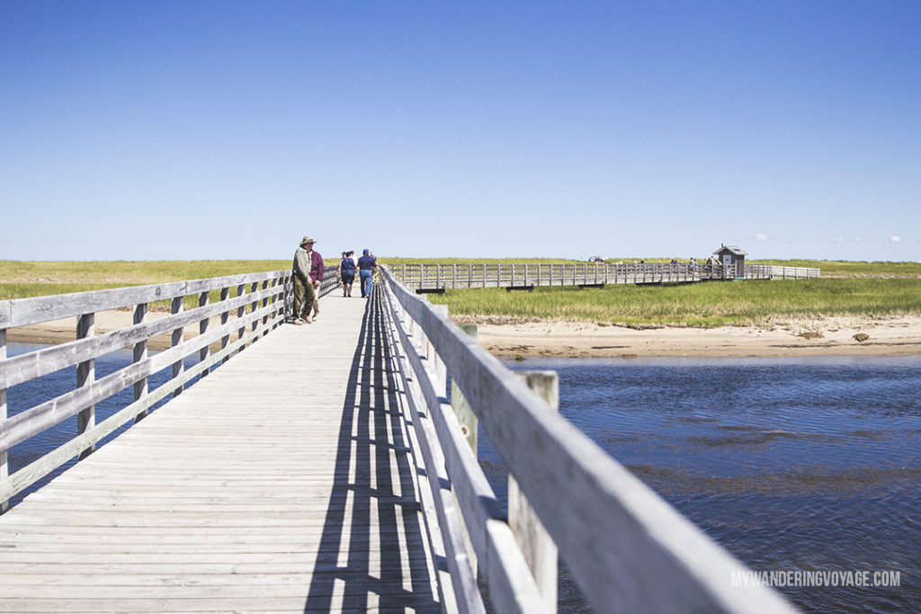 Discover Kouchibouguac National Park - 10 treasures to discover in New Brunswick, Canada. From rugged coasts to sandy beaches to French heritage and fresh seafood, New Brunswick has it all   My Wandering Voyage