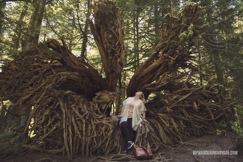 Cathedral Grove | Get out and explore Beautiful British Columbia. From the coastal rainforests to the summit of mountains to cities like Vancouver and Victoria, there is so much to discover in British Columbia. Here's everything you need to see in 10 days in British Columbia | My Wandering Voyage travel blog