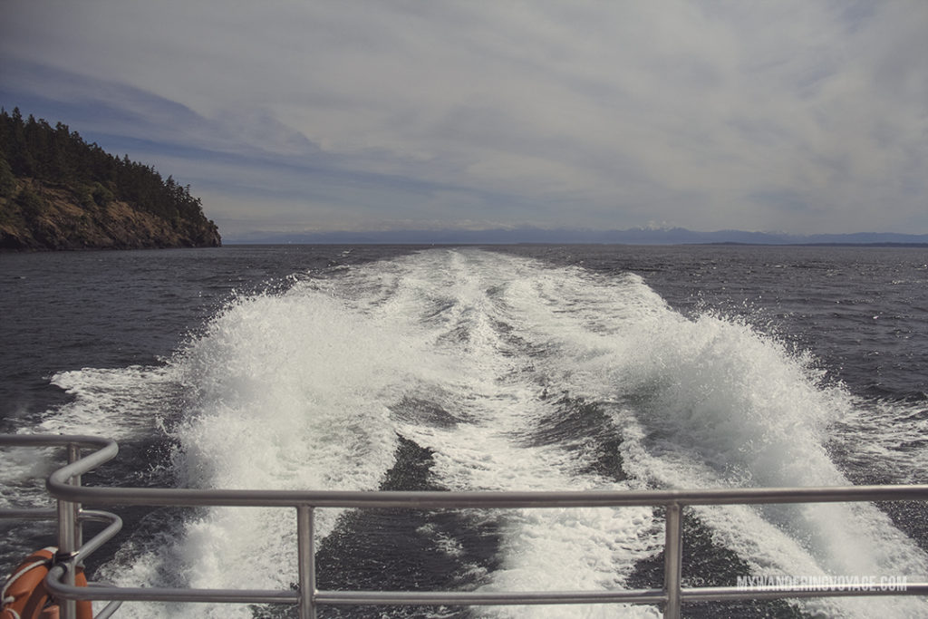 Salish Sea | Whale watching is one of the best experiences to have in British Columbia. With so many whales calling the Salish Sea home, it's the best place to view Orcas in their natural habitat. Take a whale watching tour with Eagle Wing tours. | My Wandering Voyage travel blog