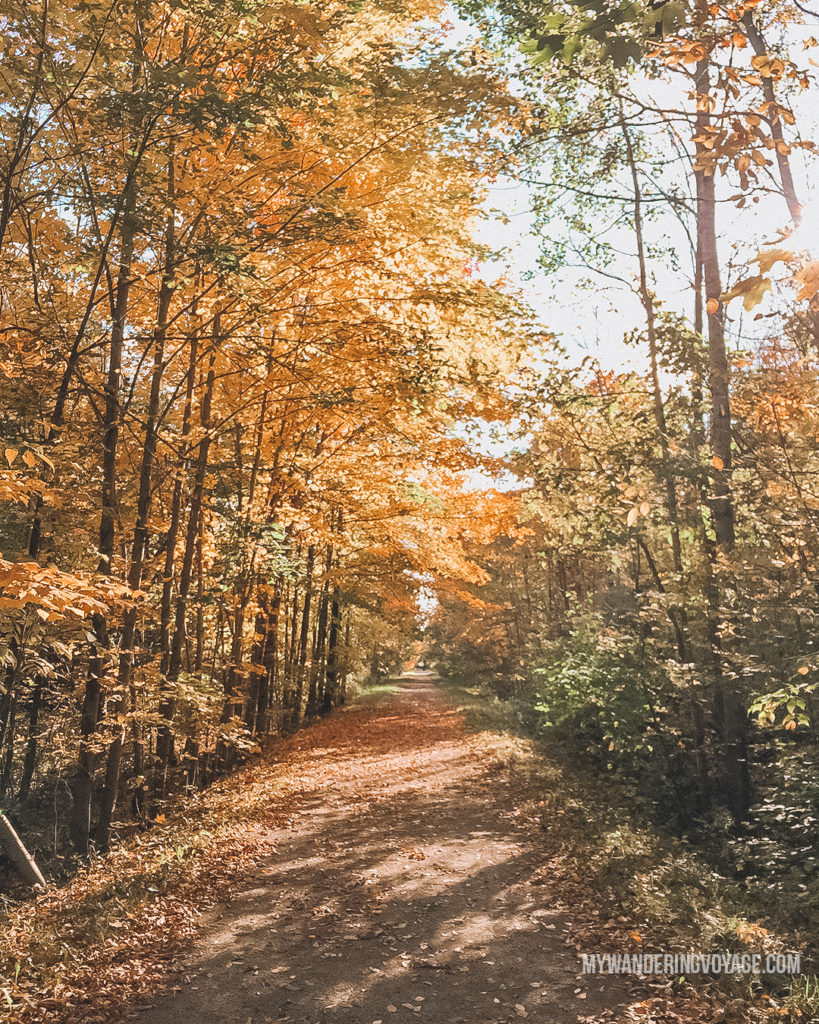 Elora Cataract Trail in the Fall | The ultimate list of things to do in Elora, Ontario. Visit Elora for its small town charm, natural beauty and one-of-a-kind shops and restaurants | My Wandering Voyage travel blog