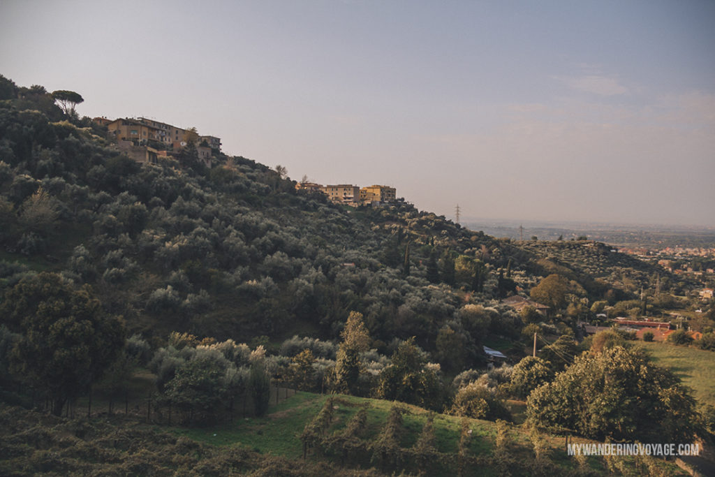 Tivoli, Italy olive grove | Visit UNESCO World Heritage Sites Villa Adriana and Villa d'Este in a day trip to Tivoli, Italy, a mountainside town about 30 kilometres from Rome. | My Wandering Voyage travel blog #rome #italy #travel #UNESCO