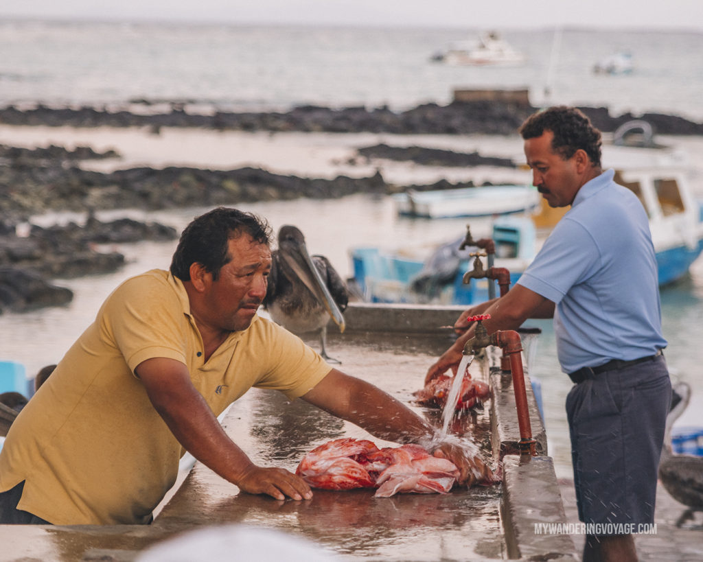 Fish market | A trip to the Galapagos Islands will be unforgettable, and with these Galapagos Islands travel tips, you'll be sure to have a worry-free trip from start to finish. | My Wandering Voyage travel blog #galapagos #galapagosislands #travel #traveltips #Ecuador #southamerica