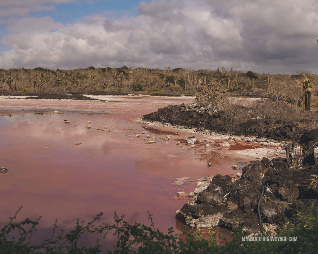 Salt Marsh | A trip to the Galapagos Islands will be unforgettable, and with these Galapagos Islands travel tips, you'll be sure to have a worry-free trip from start to finish. | My Wandering Voyage travel blog #galapagos #galapagosislands #travel #traveltips #Ecuador #southamerica