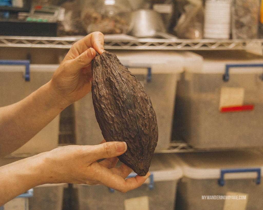 cacao pod Hummingbird Chocolate Maker