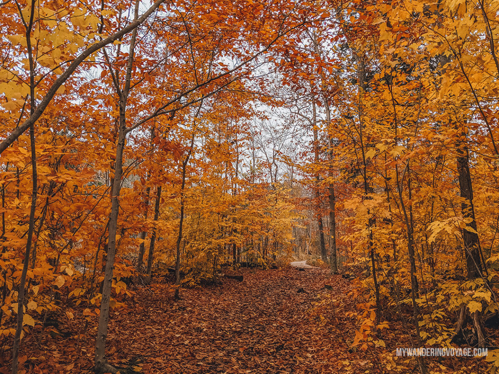 Killbear Provincial Park in the fall