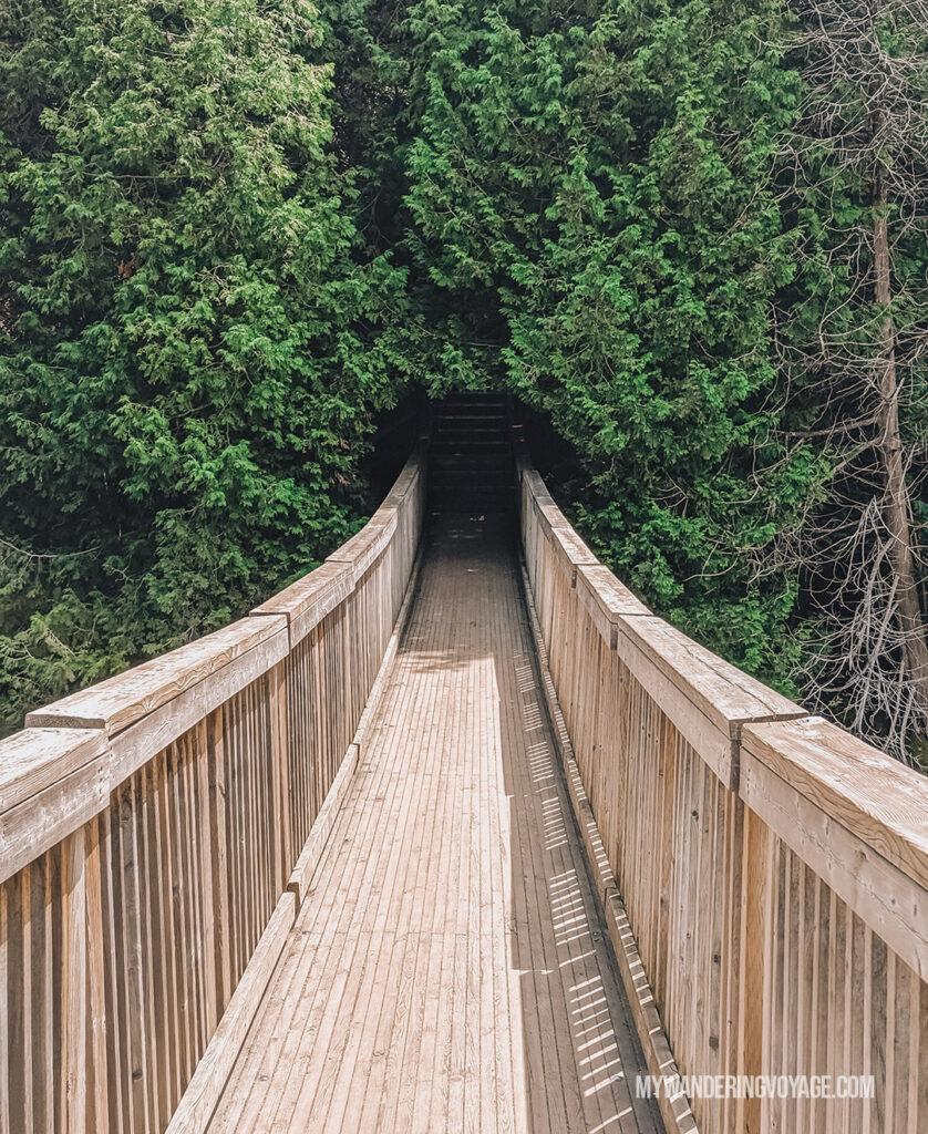 Belfountain Conservation Area swing bridge | Best scenic bridges in Ontario