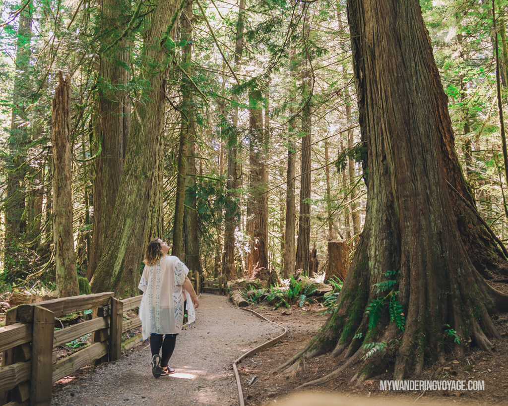 Giant trees in Cathedral Grove Macmillan Provincial Park | Vancouver Island road trip 5 day itinerary | My Wandering Voyage