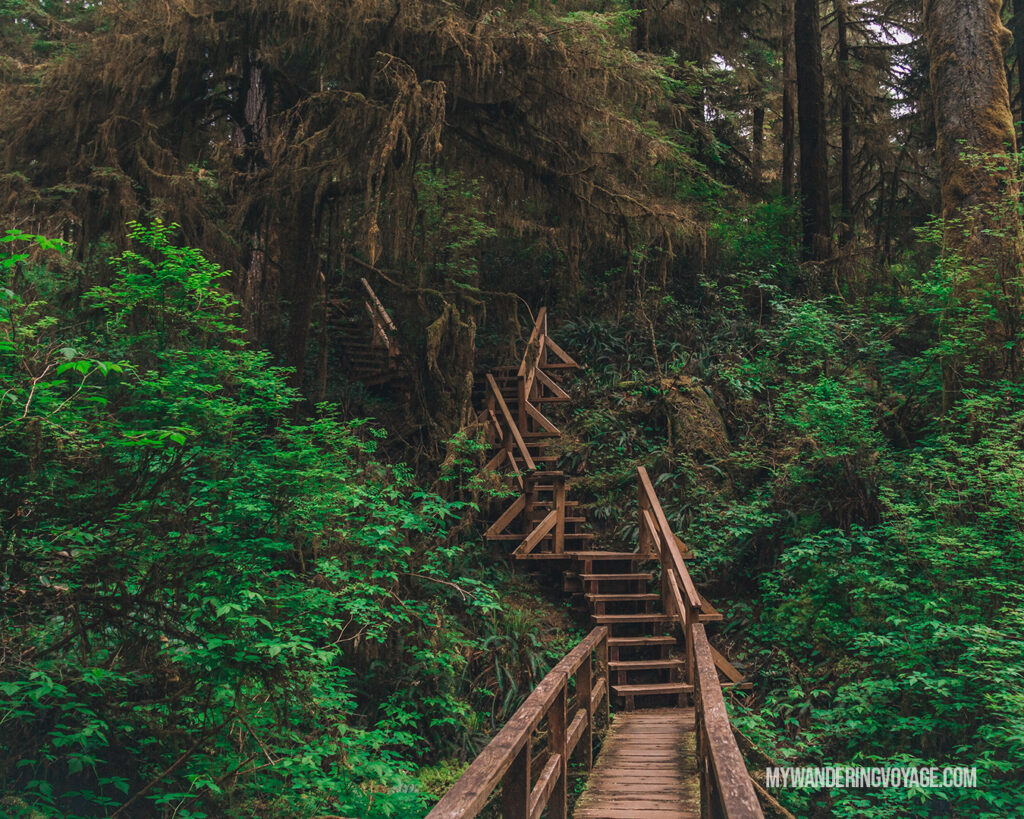 The Rainforest Loop Trail in Pacific Rim National Park, BC | Vancouver Island road trip 5 day itinerary | My Wandering Voyage