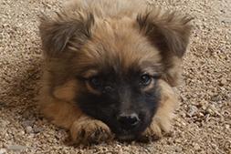 adoption-puppy