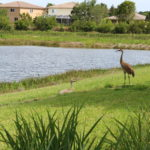 Newport Isles Gated Community and Sand Crane