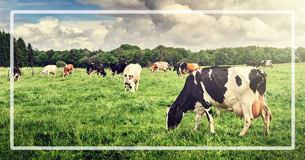Dierks Farms All Natural Antibiotic Free Beef