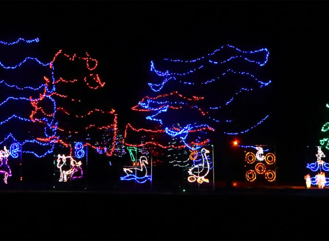 COL lighted trees (photo by Ryan Clausen)