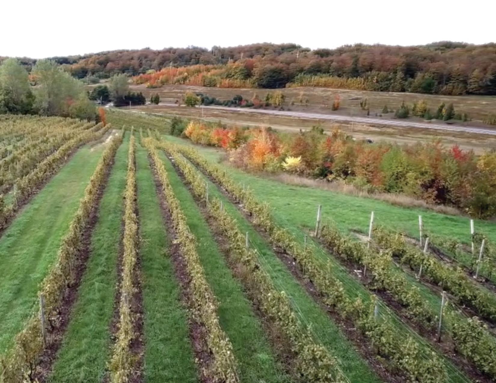 LWC Harvest