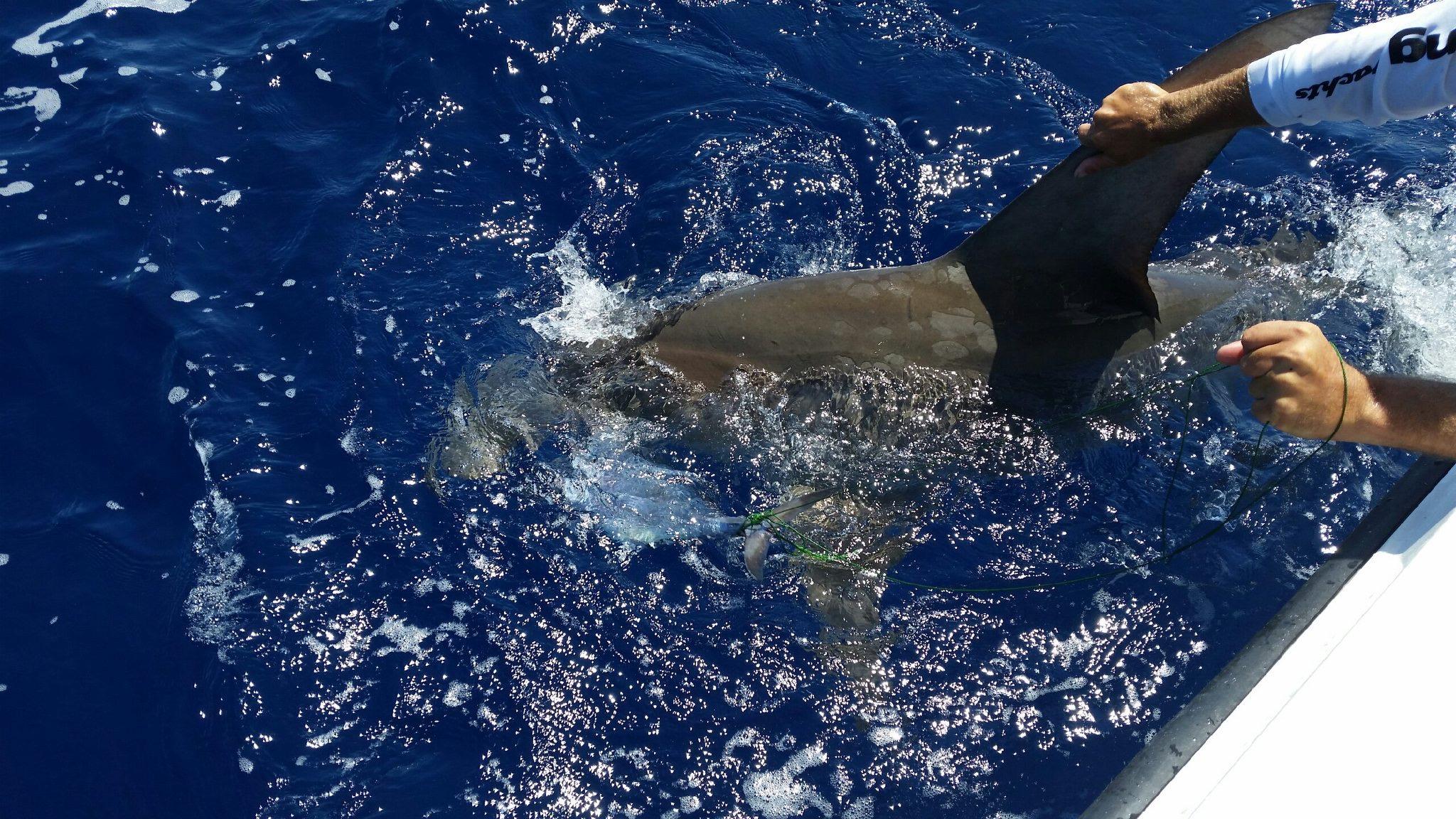 Shark Fishing in Key West Florida