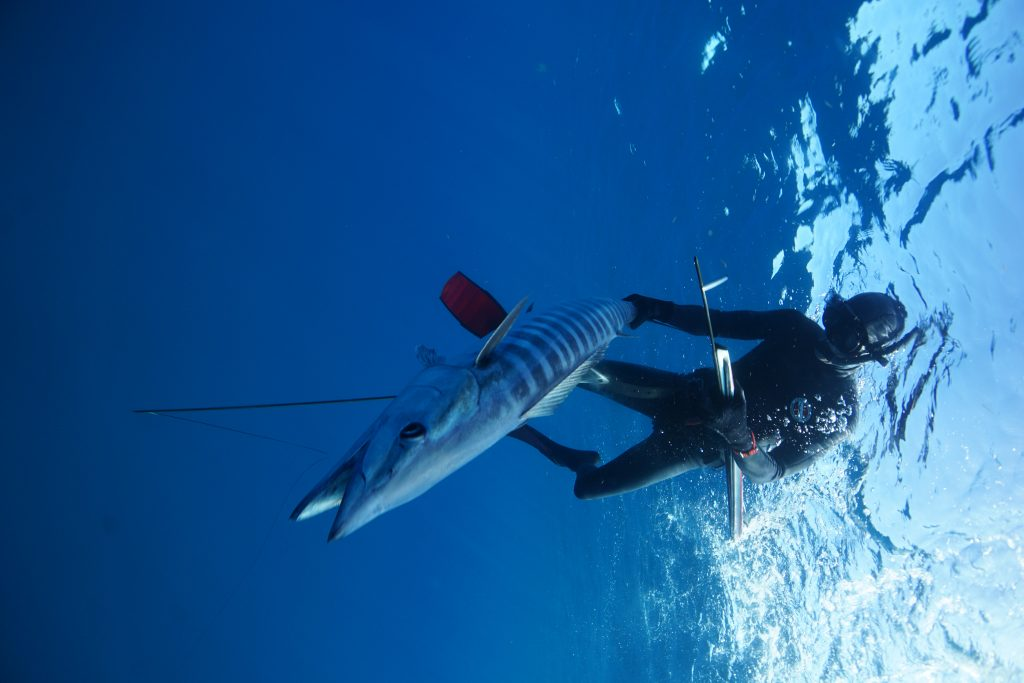 Underwater Spearfishing Wahoo Key West