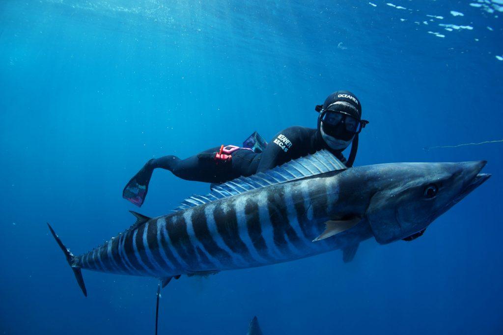 Nice Wahoo Underwater