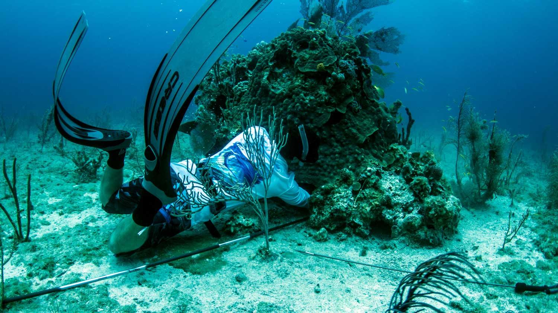 Spear Fishing charters Key west